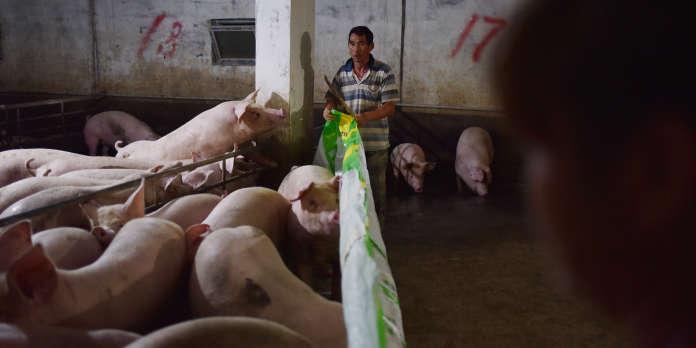 En Chine, la flambée du prix du porc, une crise majeure pour les autorités