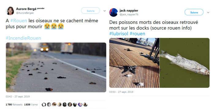 Voici deux exemples de messages faisant le lien entre des morts d'animaux et la catastrophe de Lubrizol (le compte intitulé« Aurore Bergé», à gauche, n'est pas celui de la députée LRM mais un profil qui se dit «parodique»).