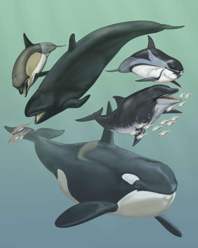 Quelques cétacés descendant de mammifères quadrupèdes qui vivaient sur la terre ferme il y a 52 millions d'années.