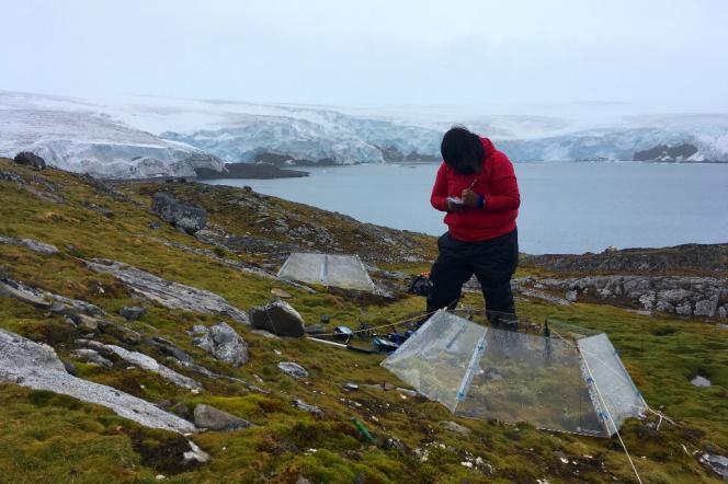 Une scientifique relève la température du sol et étudie la façon dont les végétaux réagissent aux variations de températures, sur l'île du Roi-George, en Antarctique, le2février 2018.
