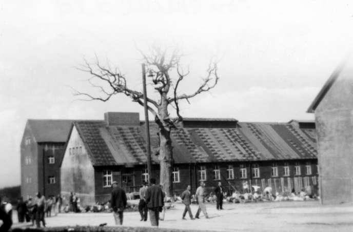 « L'arbre de Goethe », Buchenwald, juin 1944.