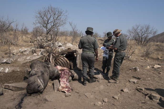 Une carcasse d'un rhinocéros blanc, abattu par des braconniers, retrouvée dans le parc national Kruger le 21 août 2018, dans le nord-est de l'Afrique du Sud.