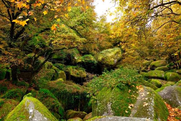 Dans le parc naturel régional d'Armorique, la forêt de Huelgoat en automne.