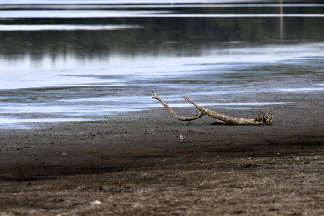 L'étang des Landes, près de Lussat (Creuse), le 20 juillet.