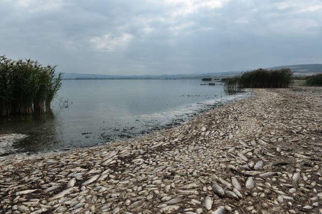 Des poissons morts jonchent le bord du lac Koronia, en Grèce, après une sécheresse prolongée, le 19 septembre.