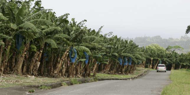 Chlordécone: quatre ministres auditionnés sur la pollution aux Antilles
