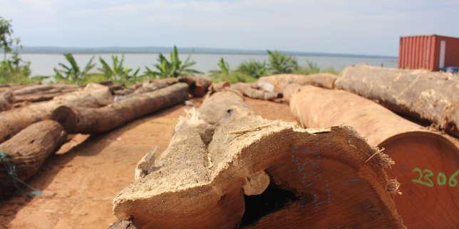 Du bois ghanéen pour reconstruire Notre-Dame?