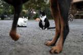 Et si les chats éprouvaient le même attachement pour les humains que les chiens?
