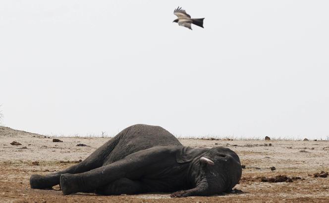 Un éléphant mort dans le parc national de Hwange, au Zimbabwe, en septembre 2013.