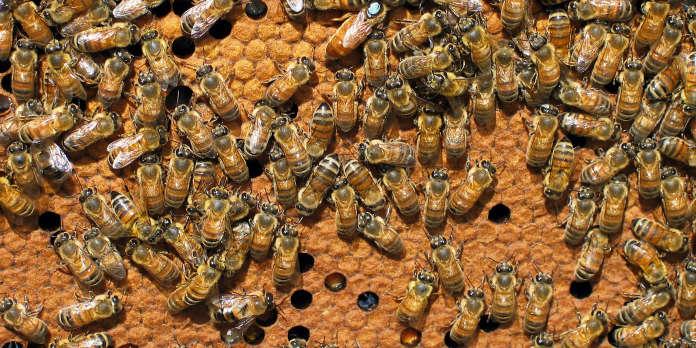 Abeilles et pesticides : le Parlement européen recadre la Commission
