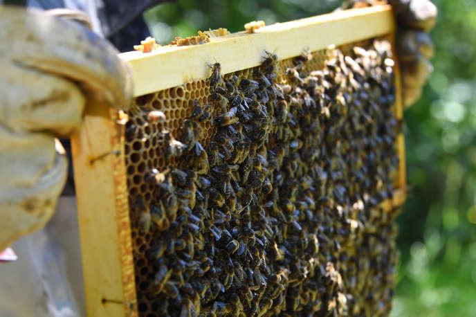 Une ruche d'abeilles noires à Pont de Montvert (Lozère), en juin 2018.