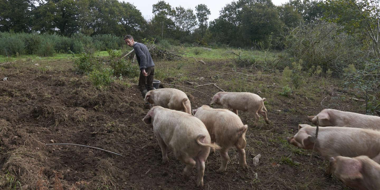 Bastien Moysan, agriculteur,sur son exploitation à Daoulas (Finistère) le 23/10/2019