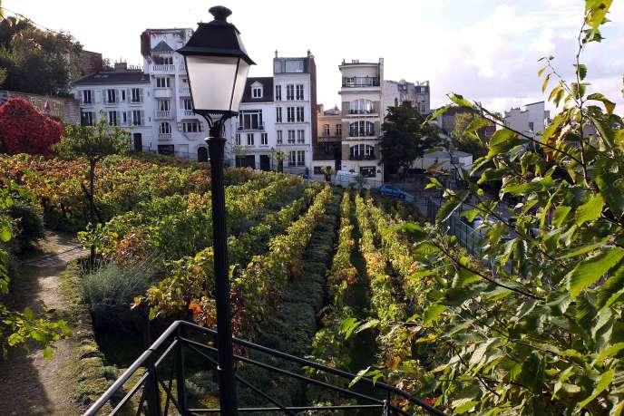 «Ce projet permettra de renouer avec la tradition maraîchère de Paris et de ses environs» (photo: vignes de Montmartre).