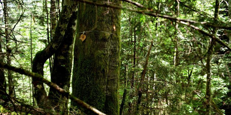 Forêt cinéraire à Arbas. Juin 2019.  ©Philippe Guionie  Philippe Guionie pour Le Monde