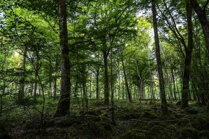 Une forêt du parc national partagé entre la Bourgogne et la Champagne, près de Chatillon-sur-Seine, en 2017.