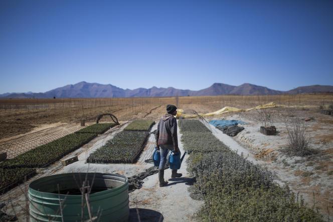 Exploitation agricole à Maseru, capitale du Lesotho, en août 2019.