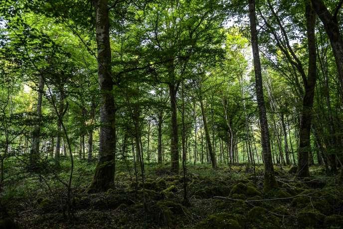 Le parc national des forêts s'étendra de la Haute-Marne à la Côte-d'Or, notamment ici, près de Châtillon-sur-Seine.