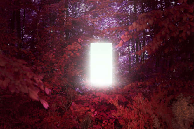 «Solastalgia», une installation d'Antoine Viviani et de Pierre-Alain Giraud.