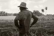 Un «machetero» (coupeur de canne à sucre) dans un champ tout juste défriché. Région de Madruga, mars 2017.