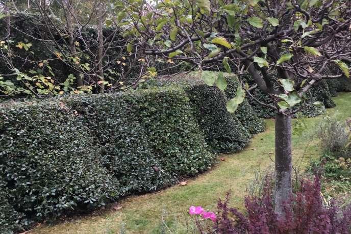 Photo Mystere 9 Le Jardin De Pascal Cribier A Varengeville