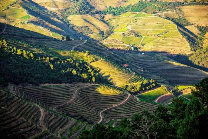 La vallée du Douro, où l'homme cultive le vin depuis deux mille ans. Elle a été classée au Patrimoine mondial par l'Unesco en 2001.