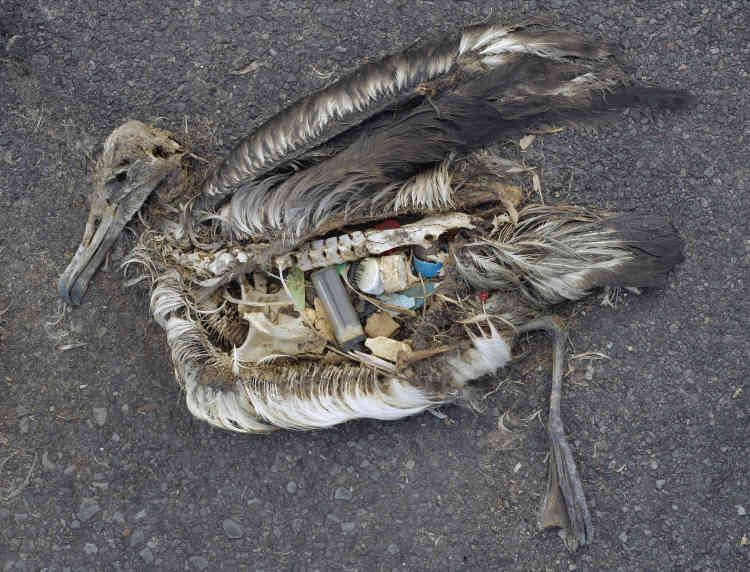 «Sur l'atoll de Midway, dans le Pacifique Nord, un groupe d'îles éloignées à plus de 2000milles [3700km] du continent le plus proche, les déchets de notre consommation de masse resurgissent dans l'estomac d'albatros morts. C'est que les poussins sont nourris de morceaux de plastiques que leurs parents, qui confondent ces détritus flottants avec de la nourriture, récupèrent au-dessus de l'océan pollué. Avec cette série, Chris Jordan a documenté un des effets dramatiques des déchets plastiques des consommateurs dans le monde.»