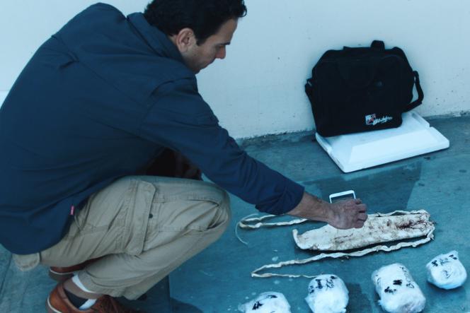Le journaliste Carlos Loret de Mola photographie l'intérieur d'une des vessies detotoabas, source de tous les trafics.
