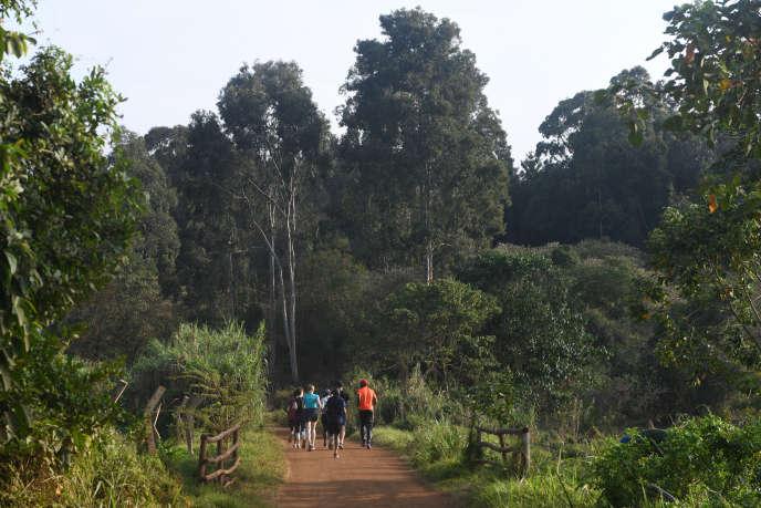 Dans la forêt de Karura, le 17 septembre à Nairobi.