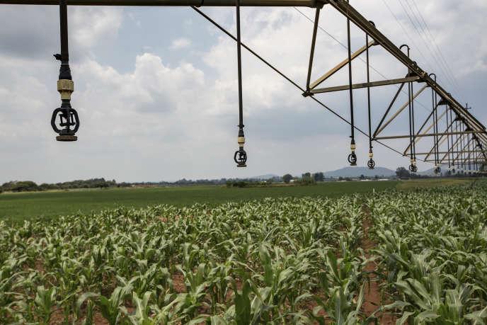 Một hệ thống thủy lợi đang lan truyền thuốc trừ sâu để kiểm soát sự phá hoại của côn trùng, phía bắc Pretoria (Nam Phi), vào tháng 2/2017.