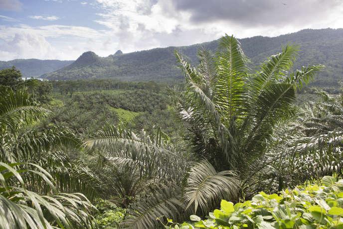 Plantations de palmiers à huile à Sao Tomé-et-Principe.