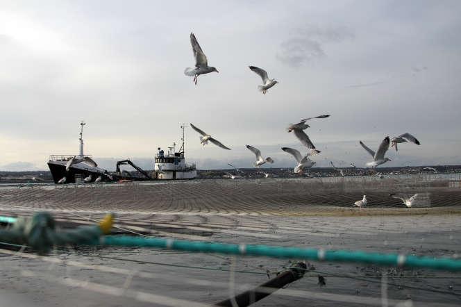 Un chalutier entre dans le port de Cherbourg-Octeville (Manche) en novembre 2012.