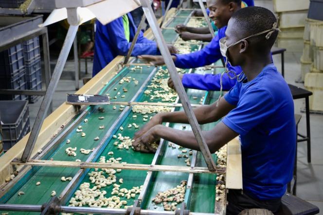 Dans une usine de noix de cajou, à Nampula, dans le nord-est du Mozambique, en mars 2018.