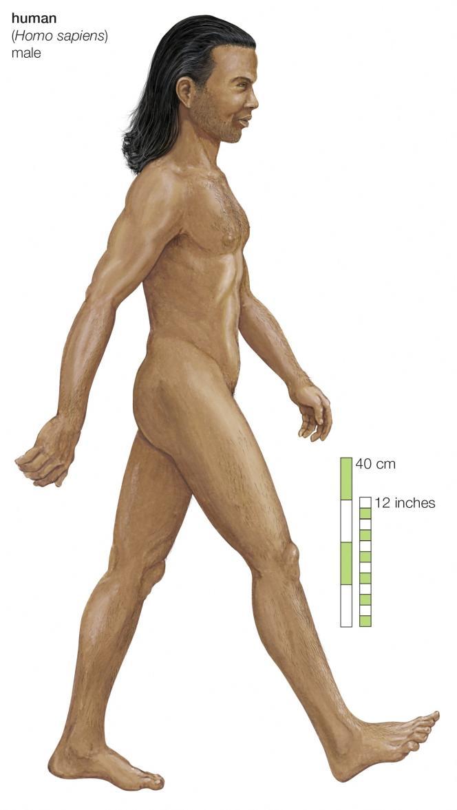 Homo Sapiens.