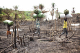 Des hommes coupent des arbres pour faire du charbon de bois dans l'est de la Sierra Leone.