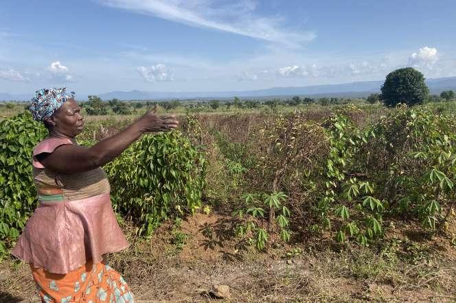 Marceline Landi, cultivatrice d'ignames à Mbé, dans le nord du Cameroun, en octobre 2019.