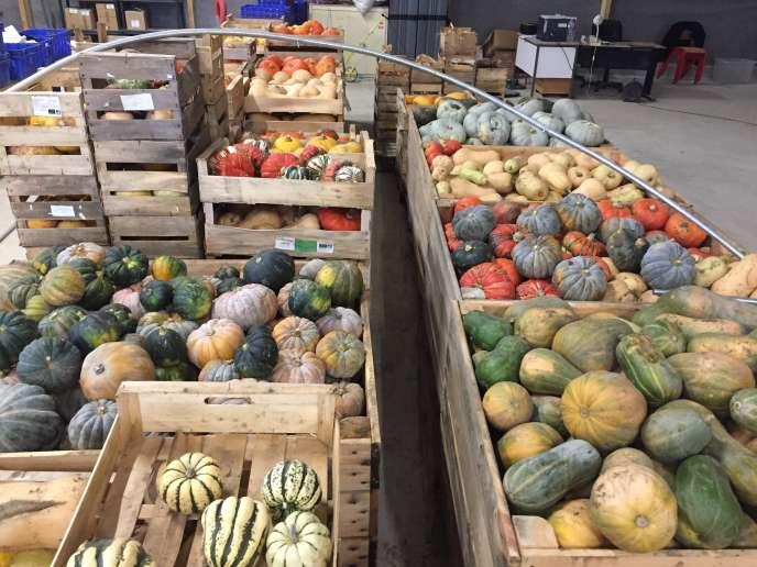 Les légumes que livreAry Régent à Blois.