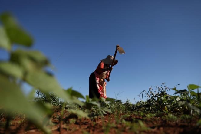 Une agricultrice sud-africaine travaille dans son champ au sud de Johannesburg, le 21février 2019.
