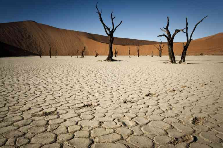 Footprints in dried mudflats in ancient riverbed of 700 year old camelthorn trees and orange sand dunes, Deadvlei, Namib Desert, Namibia, Africa