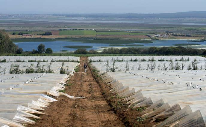 Terres agricoles au cœur de la région Rabat-Salé-Kénitra, en mars 2017.