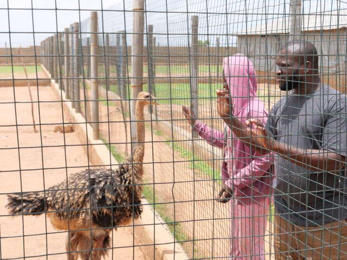 L'élevage d'autruches du centre Songhaï de Chamen, en Gambie.
