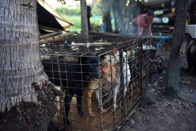 Un abattoir où sont tués des chiens destinés à la consommation, dans la province de Siem Reap au Cambodge, le 25 octobre.