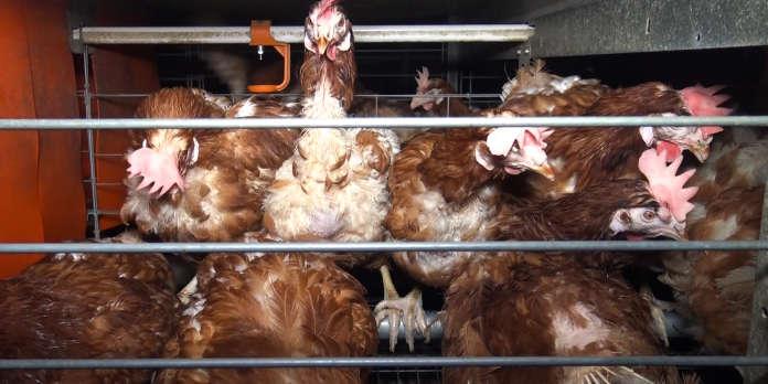 Pas de mention du mode d'élevage pour les produits transformés contenant des œufs