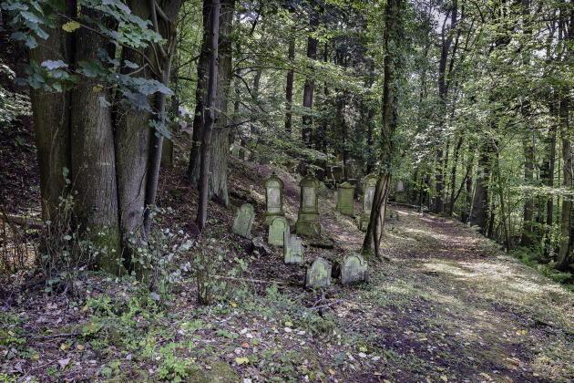 Bas-Rhin, 2017. «Ce qu'il y a de plus beau dans les cimetières, ce sont les mauvaises herbes »,Francis Picabia.