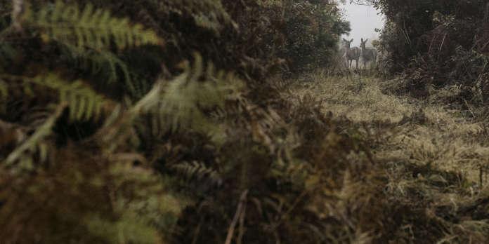 « La France est l'un des seuls pays d'Europe à autoriser la chasse d'espèces menacées »