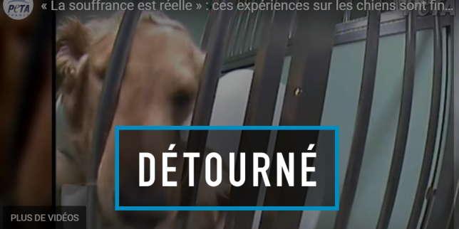 https://www.lemonde.fr/les-decodeurs/article/2019/12/06/telethon-et-experimentation-sur-les-animaux-le-vrai-du-faux_6021989_4355770.html