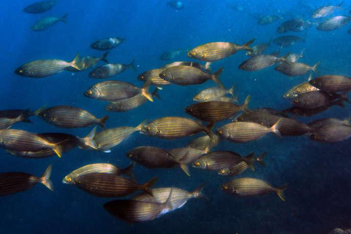 Un banc de poissons dans la mer Méditerranée le 23 mars.