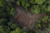 La plus grande forêt tropicale du monde a perdu 10100km² en un an.
