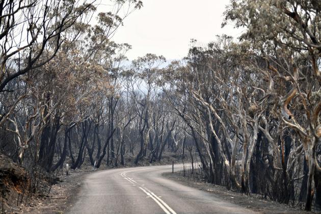Au moins 20 % de la forêt située dans la région des Blue Mountains, une zone très prisée des touristes, a été brûlée.