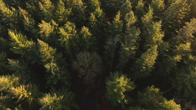 «Le rendement [des forêts] est faible, 1 à 2 % par an, mais il évolue parallèlement à l'inflation sur le long terme », précise Jean-Philippe Taslé d'Héliand,d'Oddo BHF Banque privée France.
