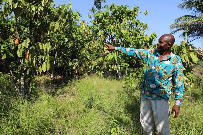 Dominique Bi Irié, planteur de cacaoyers et d'hévéas, le 28 novembre 2019, à San Pedro.